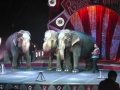 circus010