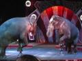 circus012
