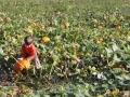 pumpkinpatch2012_002