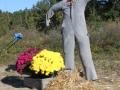 pumpkinpatch2012_008