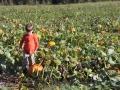 pumpkinpatch2012_017